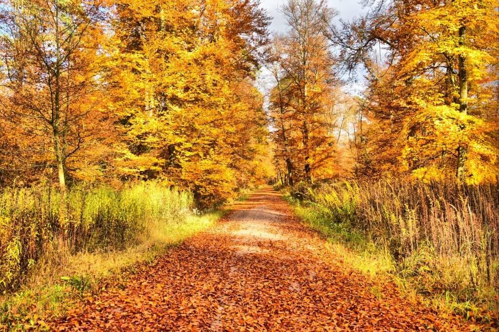 autumn-3803185_1920