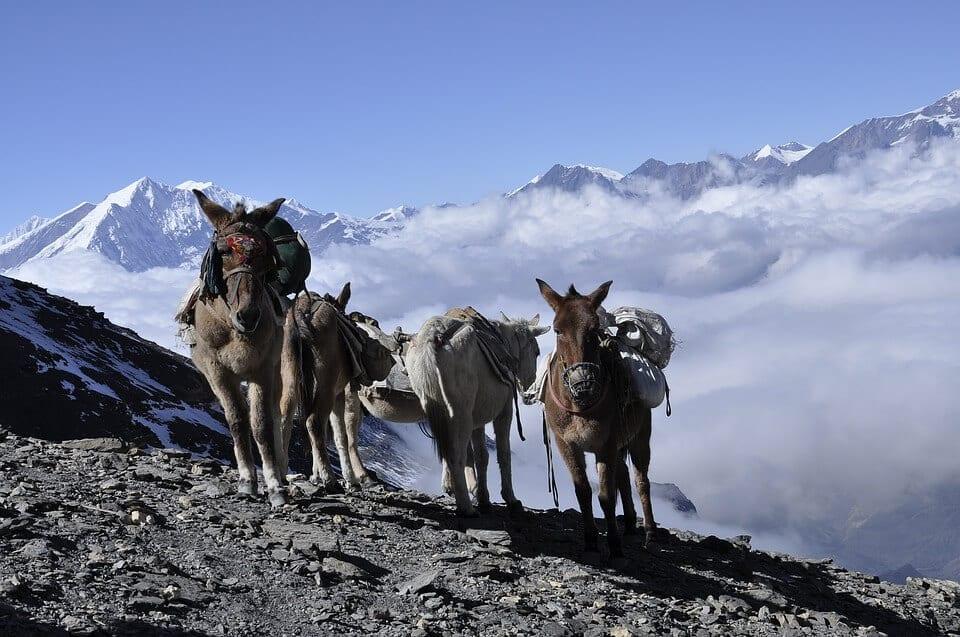 annapurna donkey